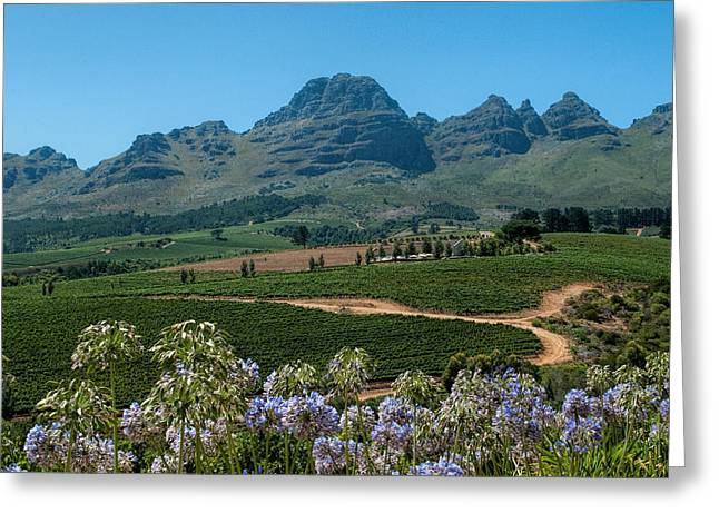 Winelands Greeting Cards - Cape Winelands - South Africa Greeting Card by Photos By Pharos