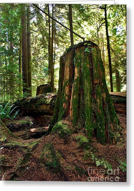 North Vancouver Photographs Greeting Cards - Capilano River Canyon 5 Greeting Card by Terry Elniski