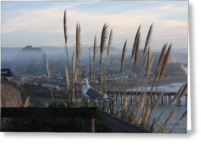 Santa Cruz Wharf Greeting Cards - Capitola Wharf and Visitor Greeting Card by Ray Fugitt