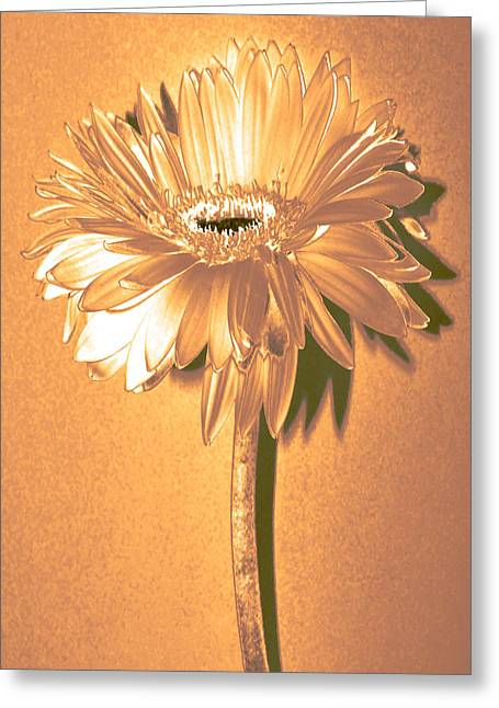 Sunburst Floral Still Life Greeting Cards - Captain and Coke Zinnia Greeting Card by Sherry Allen