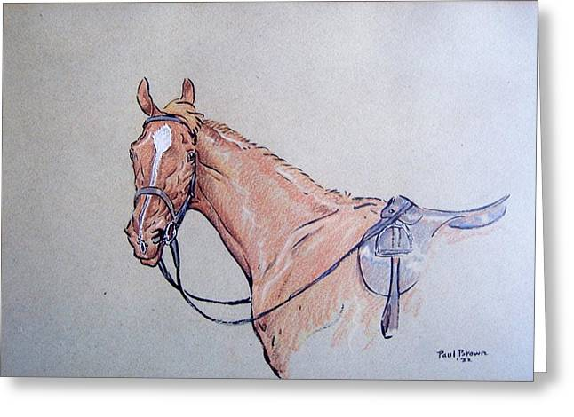 Recently Sold -  - Race Horse Greeting Cards - Captain Kettle Greeting Card by Paul Brown