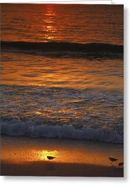 Shore Bird Print Greeting Cards - Captiva Sunset II Greeting Card by Steven Ainsworth