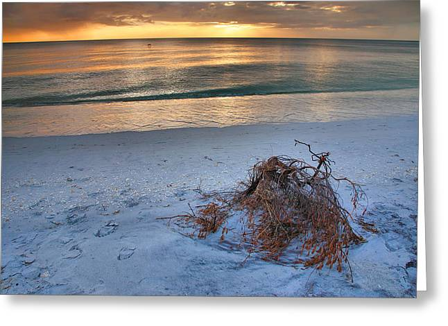 Sunset Prints Greeting Cards - Captiva Sunset IV Greeting Card by Steven Ainsworth
