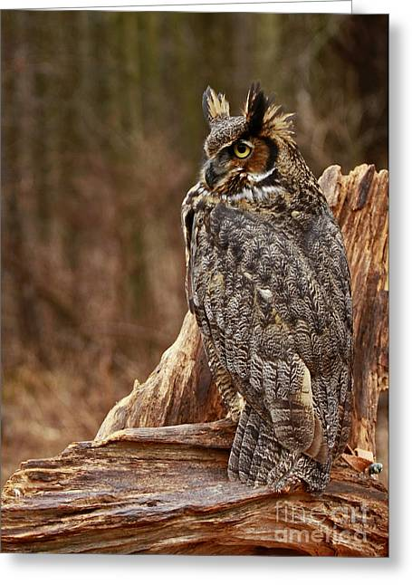 Shelley Myke Greeting Cards - Captivated by Raptors Great Horned Owl in the Forest Greeting Card by Inspired Nature Photography By Shelley Myke