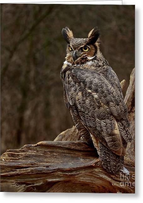 Captivated By The Great Horned Owl Greeting Card by Inspired Nature Photography Fine Art Photography