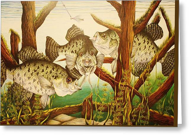 Captivating Crappies Greeting Card by Bruce Bley