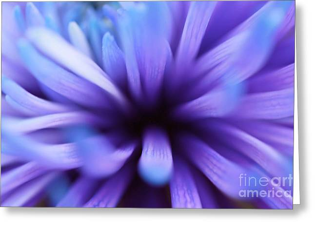 Captivation Greeting Card by Inspired Nature Photography By Shelley Myke