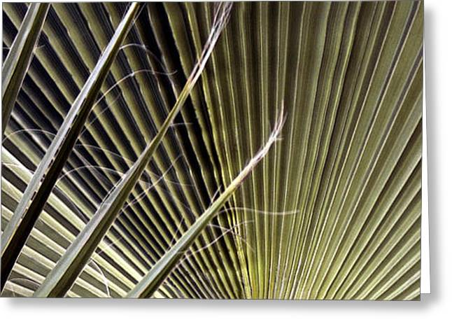 Geometric Digital Art Photographs Greeting Cards - Captivation - Palm Leaf Greeting Card by Ben and Raisa Gertsberg