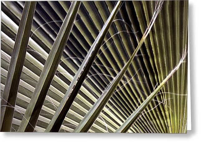 Abstract Digital Photographs Greeting Cards - Captivation - Palm Leaf Greeting Card by Ben and Raisa Gertsberg