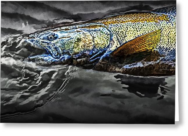 Chinook Salmon Greeting Cards - Captured Salmon during the Fall Migration Greeting Card by Randall Nyhof