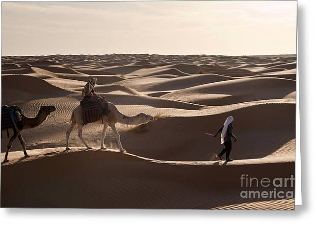 Dromedary Greeting Cards - Caravan Greeting Card by Delphimages Photo Creations