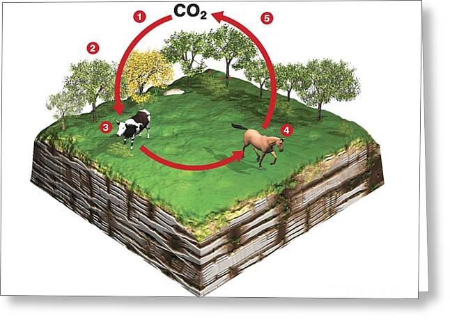 Carbon Dioxide Greeting Cards - Carbon Fixation, Artwork Greeting Card by Carlos Clarivan