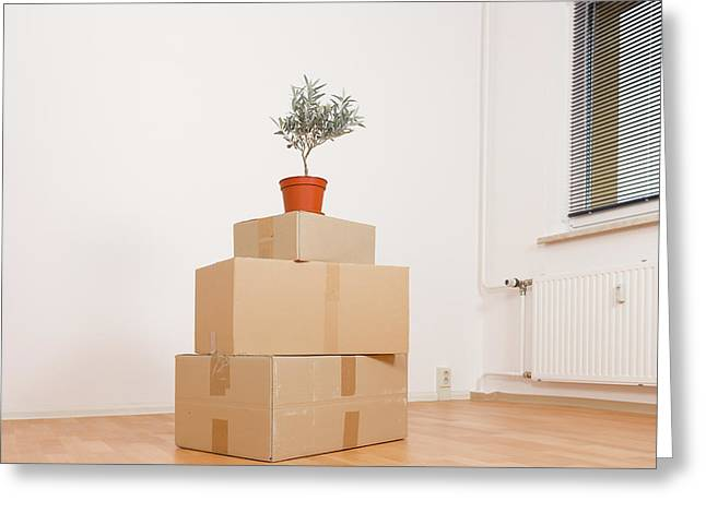 Cardboard Boxes And Pot Plant Greeting Card by Wladimir Bulgar