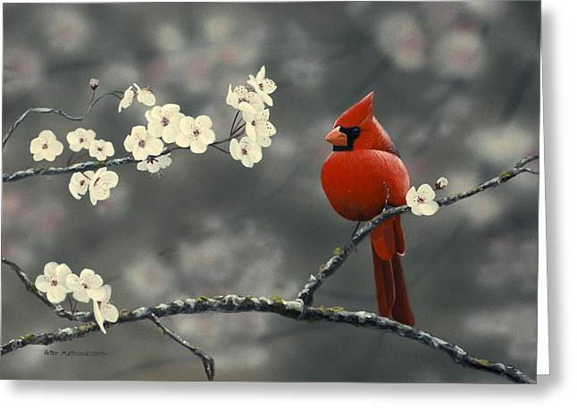 Mathew Greeting Cards - Cardinal and Blossoms Greeting Card by Peter Mathios