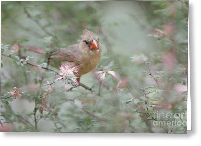 Female Mask Greeting Cards - Cardinal Greeting Card by Art Wolfe