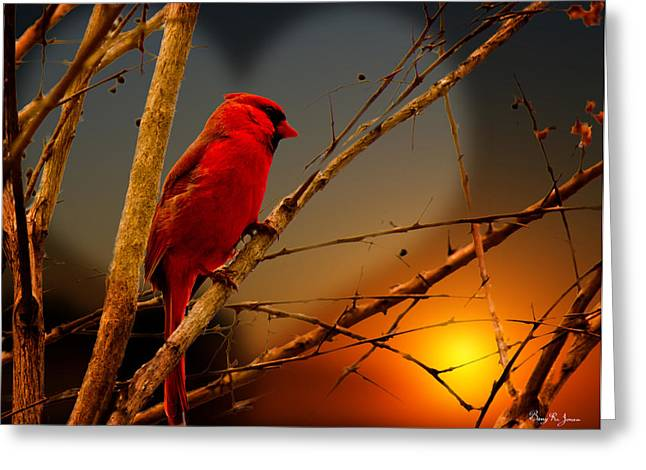 Special Occasion Greeting Cards - Cardinal at Sunset Valentine Greeting Card by Barry Jones