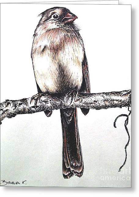 Ink Drawing Greeting Cards - Cardinal female Greeting Card by Katharina Filus