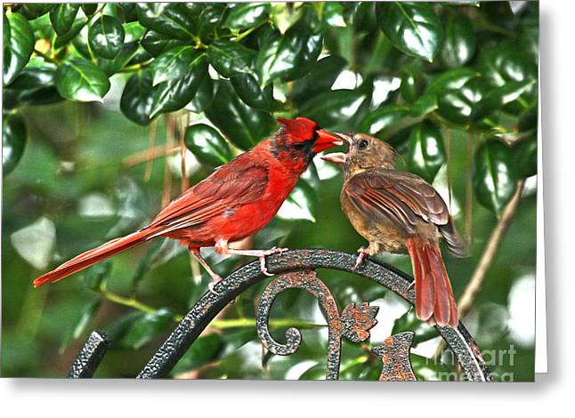 Fb Greeting Cards - Cardinal Gift of Love Photo Greeting Card by Luana K Perez
