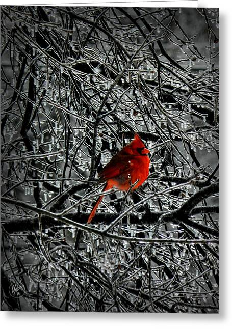 Passerine Greeting Cards - Cardinal in an Ice Storm 001 Greeting Card by Lance Vaughn