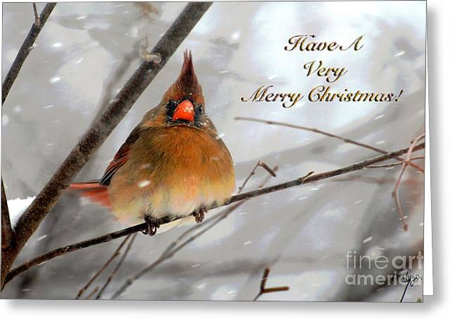 Cardinals In Snow Greeting Cards - Cardinal In Snow Christmas Card Greeting Card by Lois Bryan