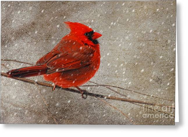 Red Bird In Snow Greeting Cards - Cardinal in Snow Greeting Card by Lois Bryan