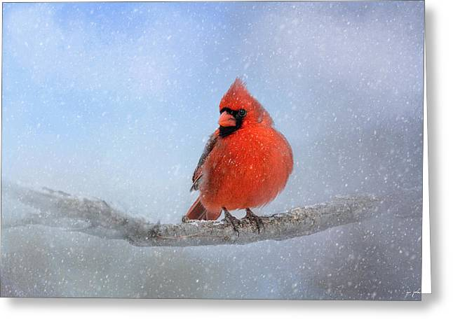 Cardinal In Snow Greeting Cards - Cardinal In The Snow Greeting Card by Jai Johnson