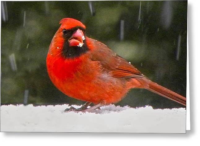 Sandi Oreilly Greeting Cards - Cardinal In The Snowstorm Greeting Card by Sandi OReilly