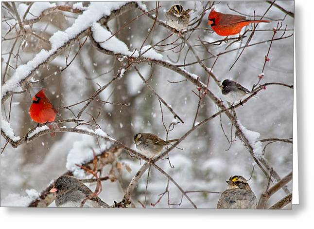 Sit-ins Greeting Cards - Cardinal Meeting in the Snow Greeting Card by Betsy A  Cutler