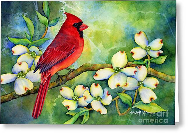 Male Northern Cardinal Greeting Cards - Cardinal on Dogwood Greeting Card by Hailey E Herrera