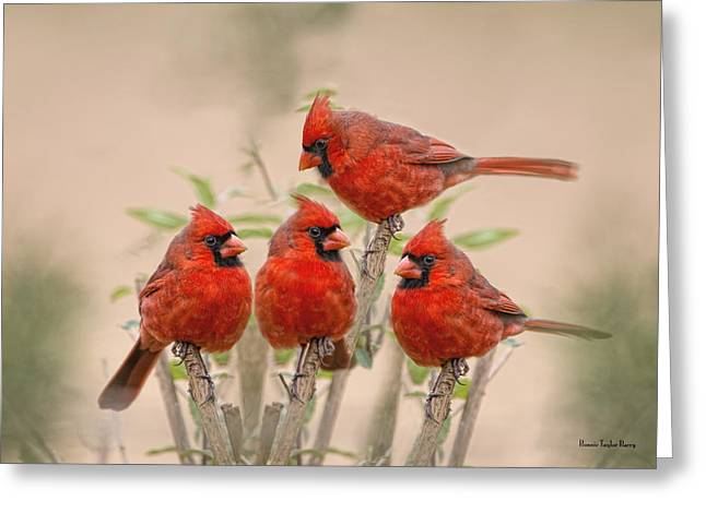 Male Northern Cardinal Greeting Cards - Cardinal Quartet Greeting Card by Bonnie Barry