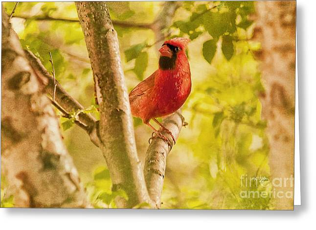 Cardinal Rules Greeting Card by Lois Bryan