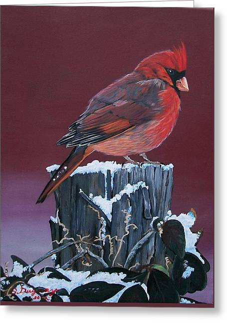 Cardinal Winter Songbird Greeting Card by Sharon Duguay