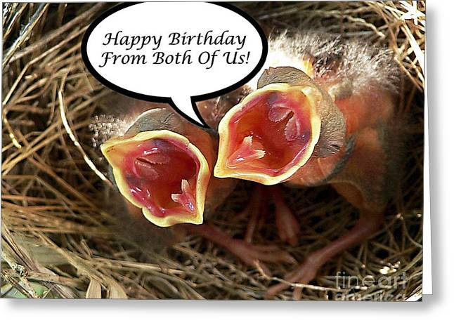 Baby Bird Greeting Cards - Cardinals Birthday Card Greeting Card by Al Powell Photography USA