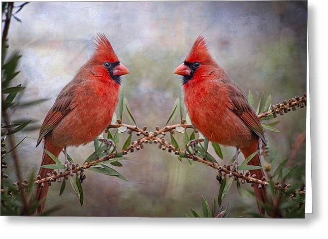 Male Northern Cardinal Greeting Cards - Cardinals in Bottlebrush Greeting Card by Bonnie Barry