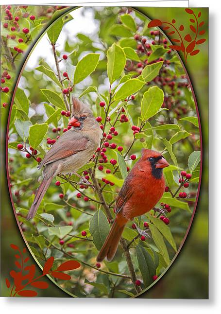 Female Northern Cardinal Greeting Cards - Cardinals in Holly Greeting Card by Bonnie Barry