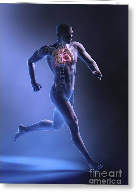 Circulation Greeting Cards - Cardiovascular Exercise Greeting Card by Science Picture Co