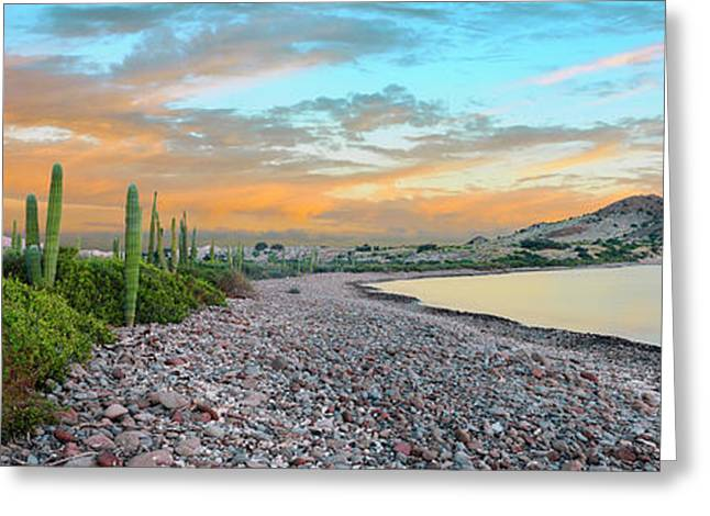 Cardon Cacti Line Along The Coast, Bay Greeting Card by Panoramic Images