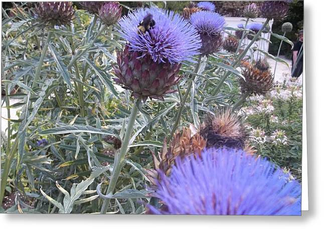 Photo Jewelry Greeting Cards - Cardoon Flowers And Bee Greeting Card by Anne Foster