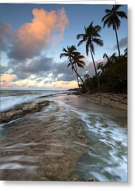 Caribbean Flow  Greeting Card by Patrick Downey