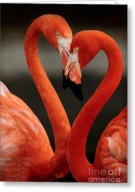 Crimson Tide Photographs Greeting Cards - Caribbean Heart Greeting Card by Adrian Tavano