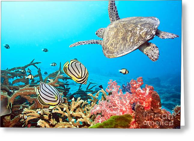 Perspective Pyrography Greeting Cards - Caribbean Sea Life Greeting Card by Boon Mee