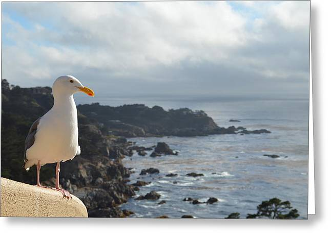 Carlos The Pacific Gull Greeting Card by Anthony Smith