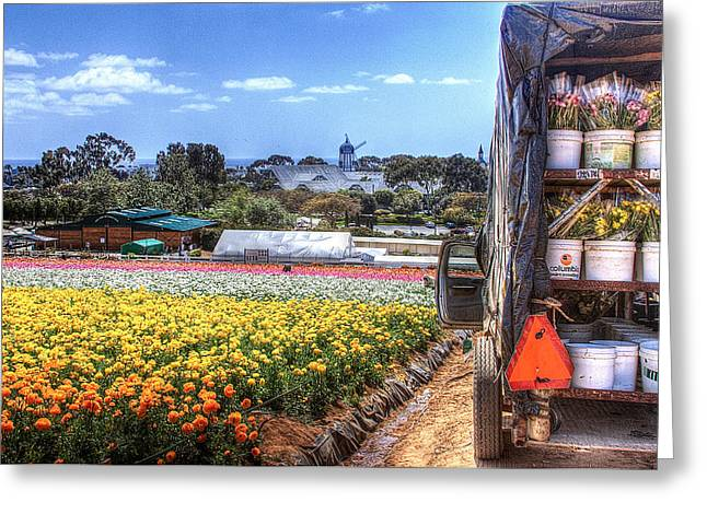 Carlsbad Flower Fields Greeting Card by Ann Patterson