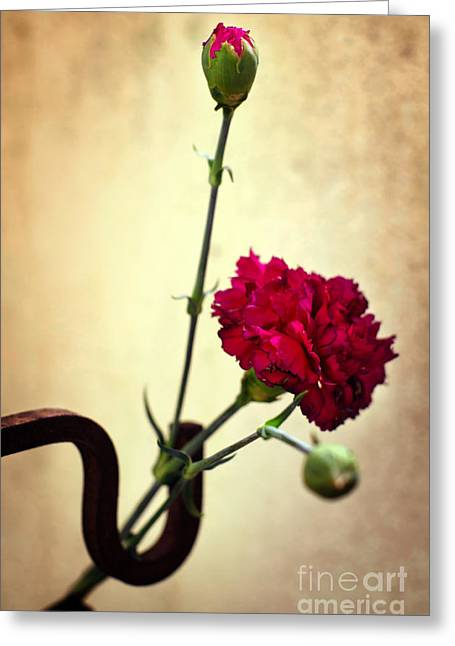 Pink Flower Branch Greeting Cards - Carnation Greeting Card by Carlos Caetano