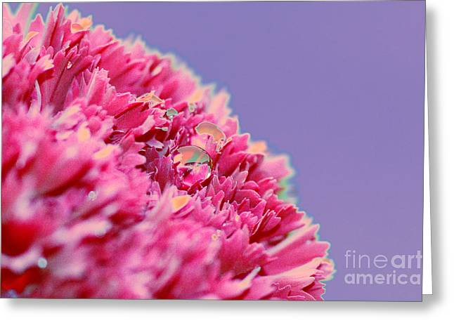 Pink Carnations Greeting Cards - Carnation Greeting Card by Carol Lynch