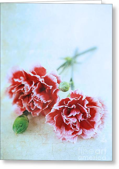 Indoor Still Life Greeting Cards - Carnations Greeting Card by Stephanie Frey