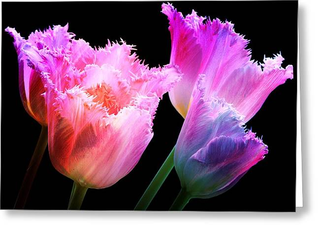 Tulip Tree Greeting Cards - Carnival Tulips Greeting Card by Debra  Miller