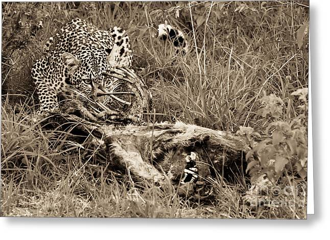 Out Of Africa Greeting Cards - Carnivore Greeting Card by Syed Aqueel