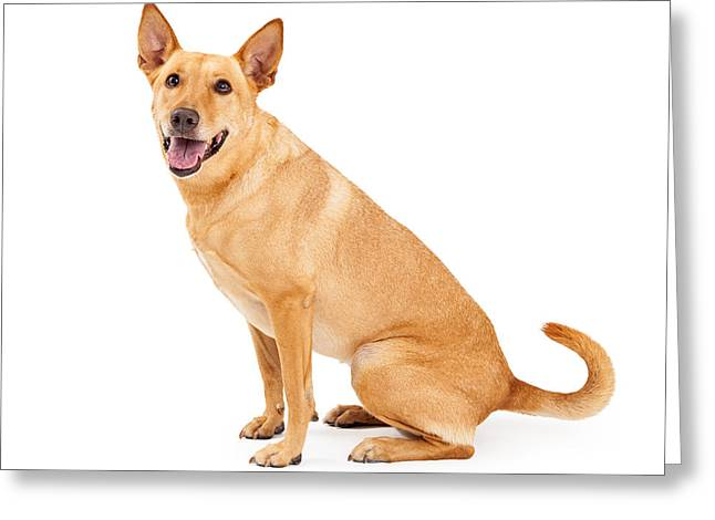 Playful Greeting Cards - Carolina Dog Sitting Profile Greeting Card by Susan  Schmitz