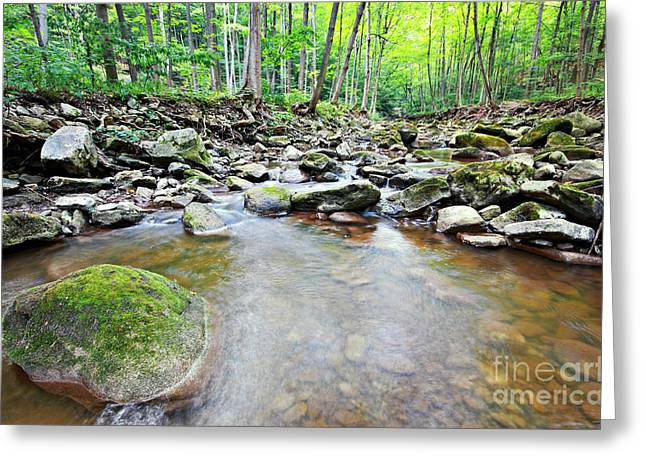 Escarpment Greeting Cards - Carolinian Forest Greeting Card by Charline Xia